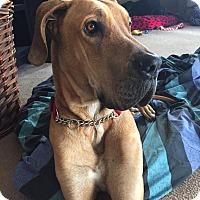 Adopt A Pet :: Titus - Mesa, AZ
