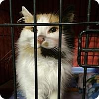 Adopt A Pet :: Gabrielle - Byron Center, MI