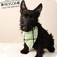 Adopt A Pet :: Skylos-adoption pending - Omaha, NE