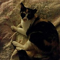 Adopt A Pet :: Patches - San antonio, TX