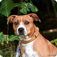 Adopt A Pet :: Denver - Westminster, MD