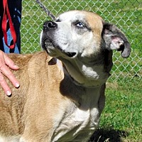 Adopt A Pet :: Jada - Batavia, OH