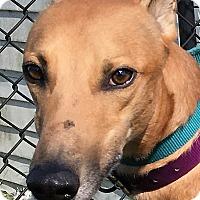 Adopt A Pet :: Slatex Expert - Longwood, FL