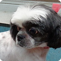 Adopt A Pet :: Lizzy - Crump, TN