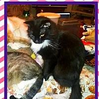 Adopt A Pet :: Sabrina - Bogalusa, LA
