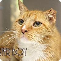 Adopt A Pet :: Baxter Boy * - Gulfport, MS