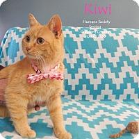 Adopt A Pet :: Kiwi - Bucyrus, OH