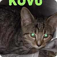 Adopt A Pet :: Kovu - Northfield, OH