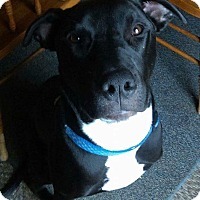 Adopt A Pet :: Onyx - Wichita, KS
