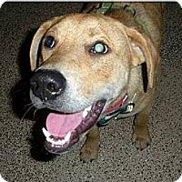 Adopt A Pet :: Emory - Franklin, TN