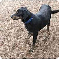 Adopt A Pet :: Sheba - Wahoo, NE