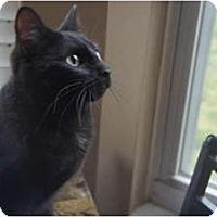 Adopt A Pet :: Jilly Boo - Xenia, OH