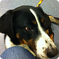 Adopt A Pet :: Jack - Minnetonka, MN