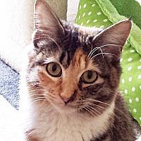 Adopt A Pet :: Fluffy - Irvine, CA