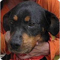 Adopt A Pet :: Stacie - Los Angeles, CA