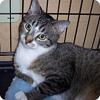 Adopt A Pet :: Turbo - Richmond, VA