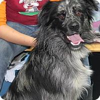 Adopt A Pet :: Ozzy*ADOPTED!* - Chicago, IL