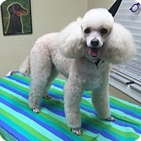 Adopt A Pet :: SKYE - Melbourne, FL