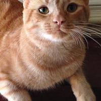 Adopt A Pet :: Shiloh K - Raleigh, NC