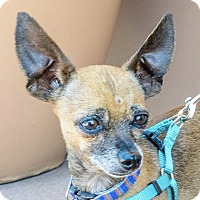 Adopt A Pet :: Mr. Pimento - San Marcos, CA