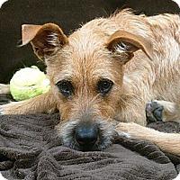Adopt A Pet :: Zoe - East Hartford, CT