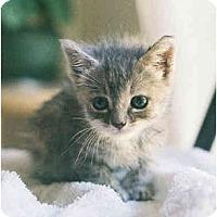 Adopt A Pet :: Vida - Davis, CA