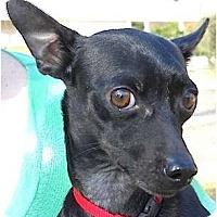 Adopt A Pet :: Mr. Wiggles - Kingwood, TX