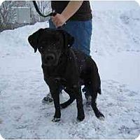 Adopt A Pet :: Millie - Belleville, MI