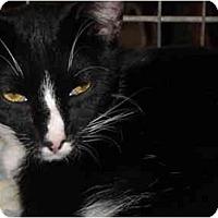Adopt A Pet :: Bonnie - Riverside, RI