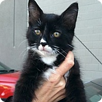 Adopt A Pet :: Sammy - Santa Monica, CA