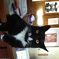 Adopt A Pet :: Mickey - New City, NY