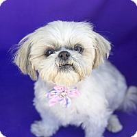 Adopt A Pet :: Chloe - Acton, CA