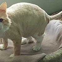 Adopt A Pet :: Oskar - Pasadena, CA