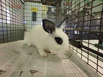 Other/Unknown for adoption in Los Angeles, California - A1652597