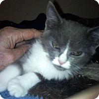 Adopt A Pet :: Sansie - North Highlands, CA