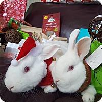 Florida White Mix for adoption in Conshohocken, Pennsylvania - Ivory and Avery