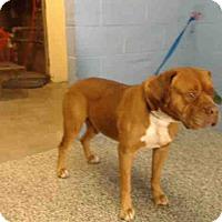 Adopt A Pet :: URGENT on 2/18 SAN BERNARDINO - San Bernardino, CA