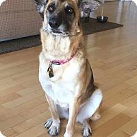 Adopt A Pet :: Bella - Pleasant Grove, CA