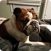 Adopt A Pet :: Carlos - Adoption Pending! - Farmington Hills, MI