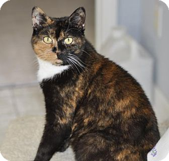 Adopt A Pet :: Mariah  - Liberty, NC