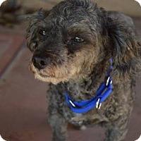 Adopt A Pet :: Jack - Santa Maria, CA
