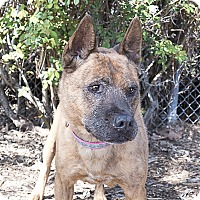 Adopt A Pet :: Little Girl - Agoura, CA