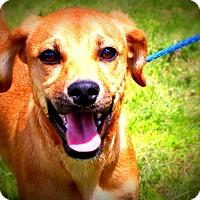 Adopt A Pet :: Speedy Gonzales - Glastonbury, CT