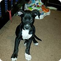 Adopt A Pet :: Rooster - Gilbert, AZ