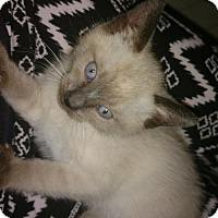 Adopt A Pet :: Casey - Los Angeles, CA