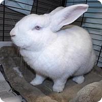 Adopt A Pet :: Evie - Oxford, MS