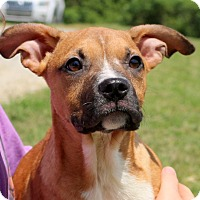 Adopt A Pet :: Boonie~adopted! - Glastonbury, CT