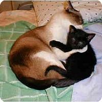 Adopt A Pet :: Balder - Proctor, MN