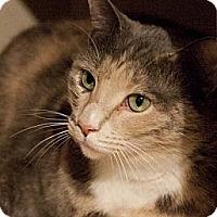 Adopt A Pet :: Gretchen - Chesapeake, VA