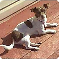 Adopt A Pet :: Dinky - dewey, AZ